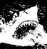 Tiburón ostentando su mandíbula en la superficie del mar ©Selene Garrido Guil
