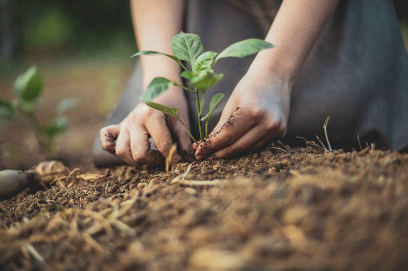 Comunas sustentables, el desafío de las autoridades locales