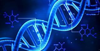 Definisi Pengertian Gen, Genotipe dan Fenotip