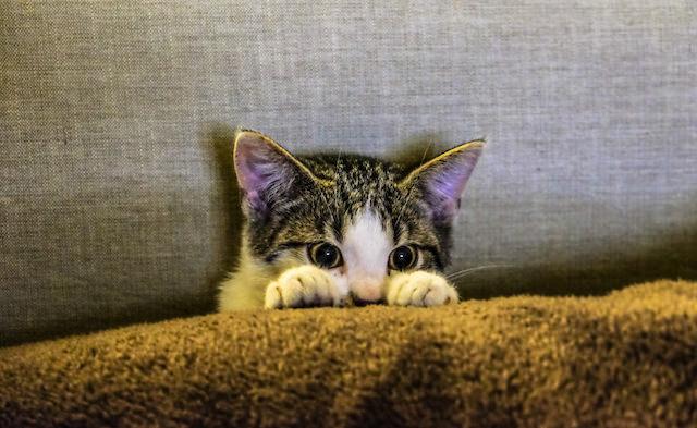 القطط تكره الأصوات العالية