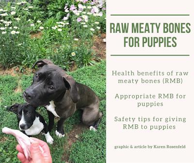 Raw Meaty Bones for Puppies