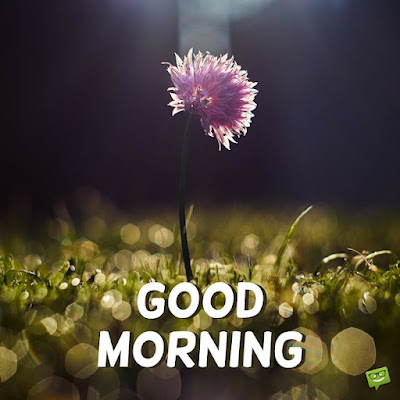 good morning nature images hd