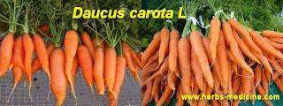 Beauty use carrot