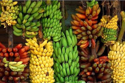 keanekaragaman jenis buah pisang