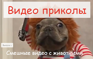 Видео приколы,подборка за сентябрь смотреть смешные видео с животными