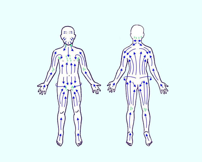 sens d'écoulement de la lymphe dans le corps humain