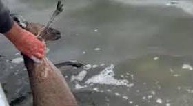 Family on fishing boat rescues kangaroo struggling to swim