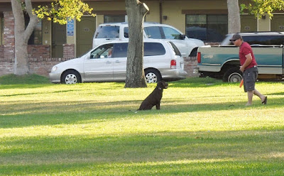 Man Playing with Dog In Paso Robles City Park