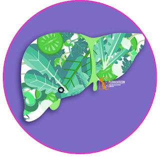 Empedu yang dihasilkan oleh hati diperlukan dalam proses pencernaan lemak. Lemak yang keluar dari lambung masuk ke usus halus sehingga merangsang pengeluaran hormon kolesistokinin. Hormon kolesistokinin mengakibatkan kantong empedu berkontraksi sehingga mengeluarkan cairan empedu ke duodenum (usus dua belas jari).