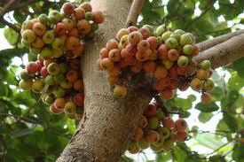 http://tipspetani.blogspot.com/2017/08/cara-benar-budidaya-tanaman-buah-tin.html