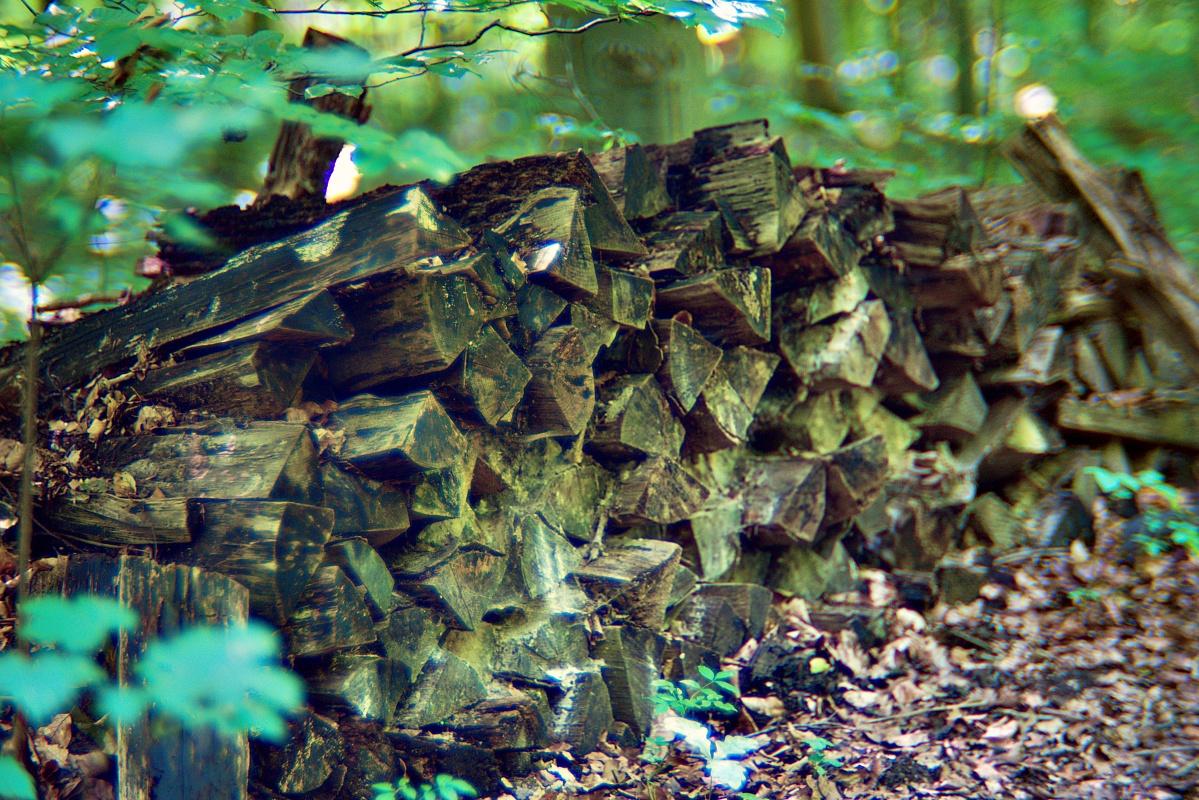 Vergessenes Brennholz