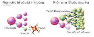 Quá trình hình thành ung thư và làm sao trị tận gốc