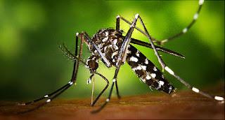 Kenali Faktor Penyebab Serta Gejala Penyakit Virus Zika