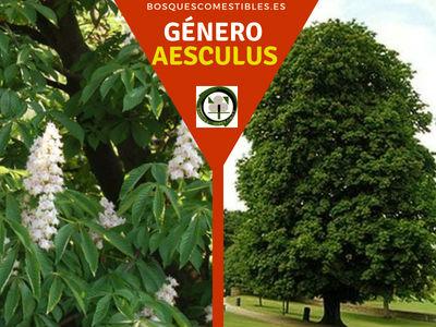 Lista de arboles en la Península del Género Aesculus