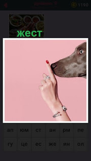 палец женской руки приложен к носу собаки, жест молчание