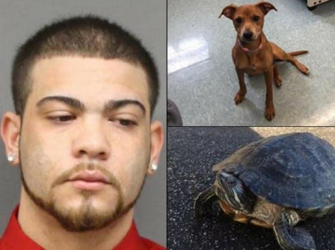 Se entrega dominicano buscado por abandonar perro hambriento y dejar tortuga congelada