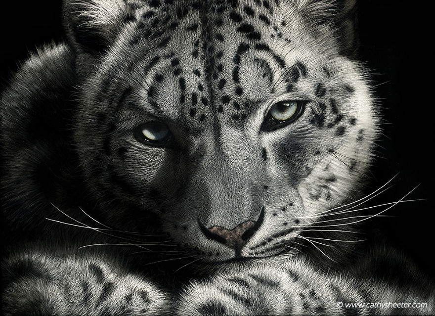 05-Leopard-Sunshine-on-My-Shoulders-Cathy-Sheeter-Hyper-Realistic-Scratchboard-Wild-Animal-Drawings-www-designstack-co