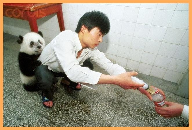Pandas Tiernos A Lapiz