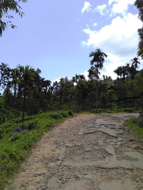 Chembra Peak Trekking - The Rugged Approach Road