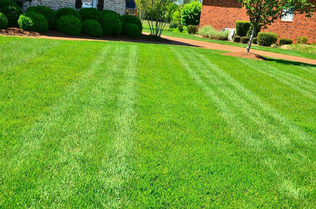 Tips For Taking Better Care of Your Lawn When It Feels Like Too Much