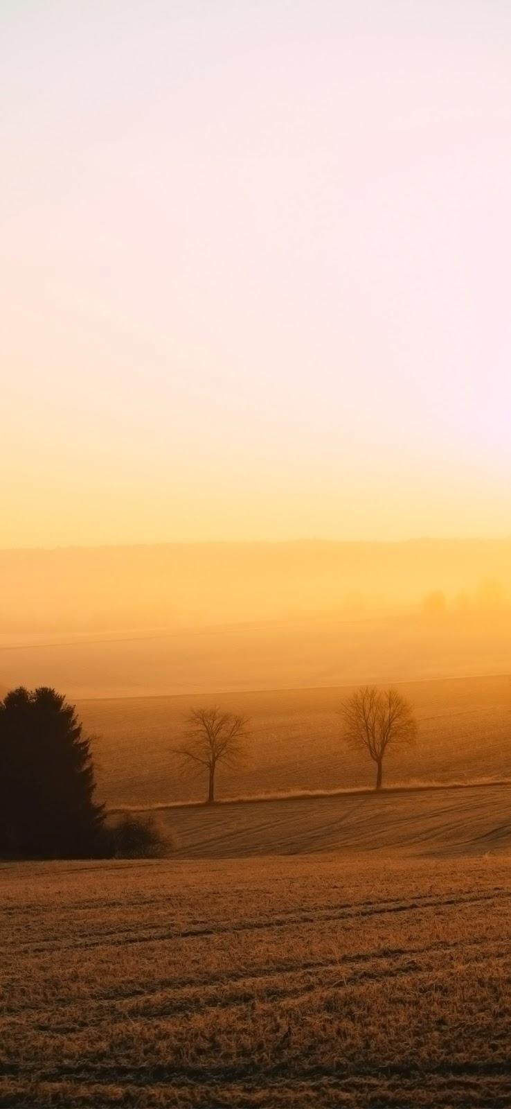 brown field during sunset wallpaper