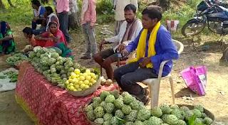 पातालकोट के आदिवासी ग्रामीणों का आय का साधन बना सीताफल