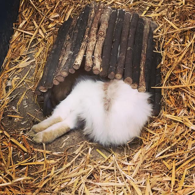 Godstone Farm, Surrey Review - sleepy rabbits