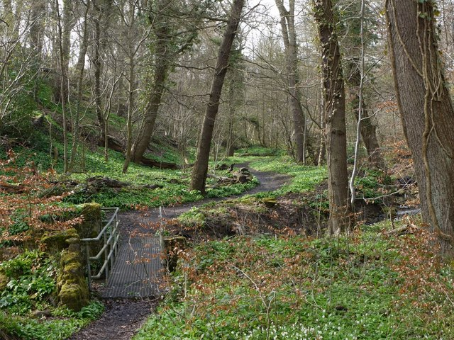 The Best Picnic Spots in Newcastle Upon Tyne | Throckley Dene