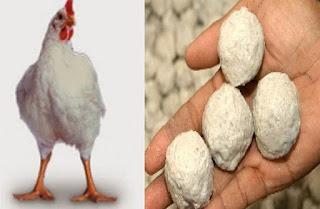 ayam dan daging bakso untuk bekal di masa krisis