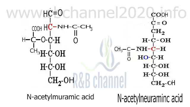 N- Acetyl galactos amine
