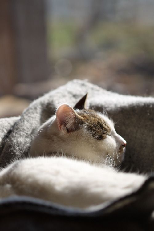 Beautiful multicolored cat asleep in a window with natural light - found on Hello Lovely Studio