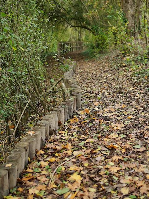 bordures de chemin dans le marais de Gannedel