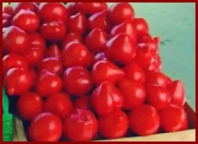 rosiile tuguiate cu mot sunt toxice sau nu