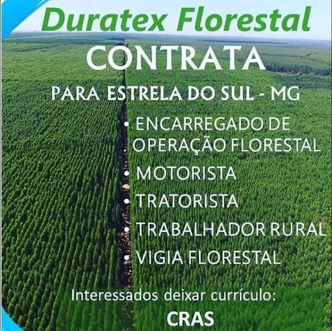 ESTRELA DO SUL: Vagas para trabalho na Duratex Florestal