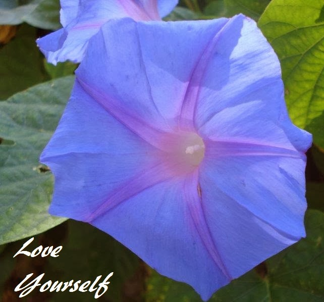 Bright purple/blue flower.
