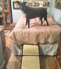rampas para cães cama alta