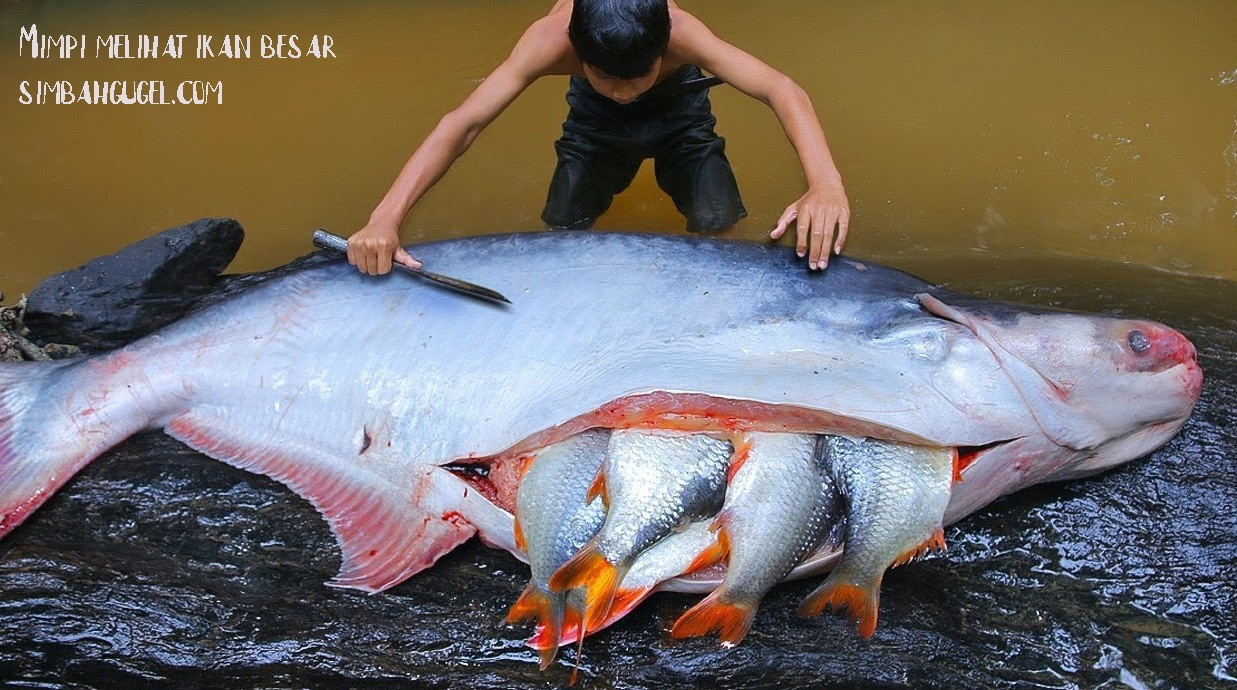 mimpi ikan besar
