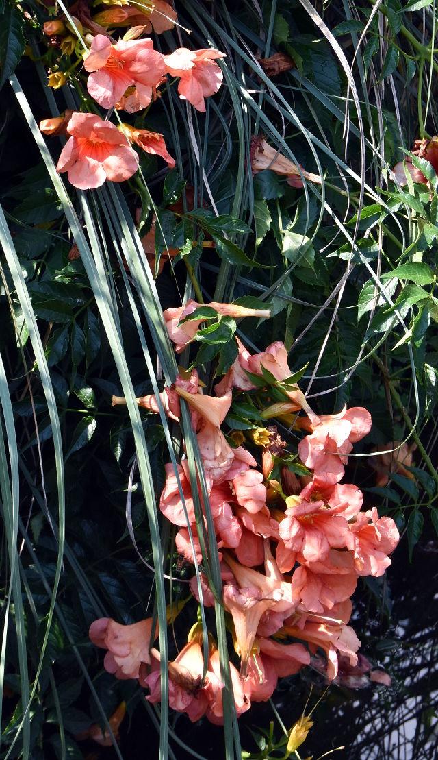 mapello, italia, italy, arkitunnelmia, lomatunnelmia, kukat, kukka