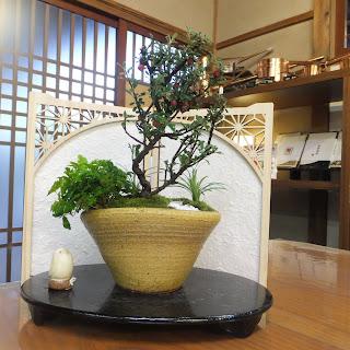 白シタンの寄せ植え盆栽
