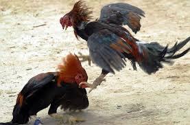 Un hombre permaneció 2 años preso acusado de robar ocho gallos: ahora es descargado del proceso