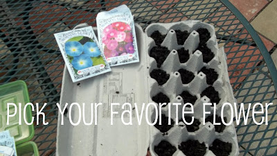 Use egg cartons to start seeds seedlings indoors