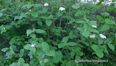 escursioni birdwatching passeggiate didattica erbe spontanee ed officinali rose lavanda orto bosco dittamo frassinella ortica ad uso alimentare gallina modenese