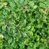 Tukang Rumput | Tukang Tanam Rumput, Tukang Rumput Taman Berkualitas