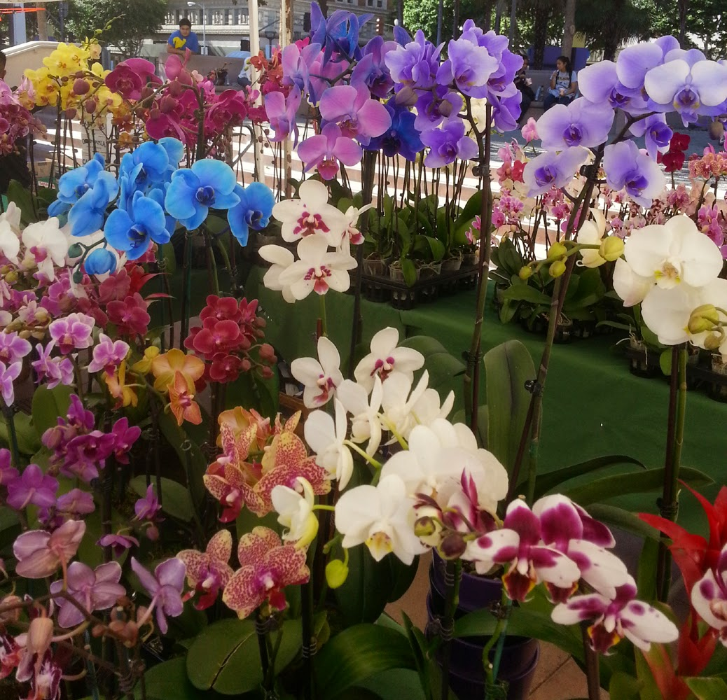Breeds Of Orchids: Nisstiiv Pens: Different Types Of Orchid Flowers