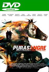 Purasangre (2016) DVDRip