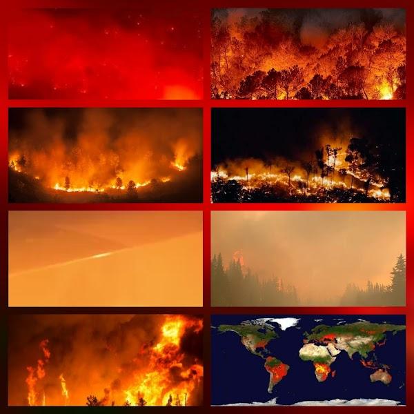 Gigantescos incendios consumen millones de hectáreas en todo el planeta.