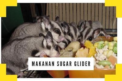 Makanan Sugar Glider