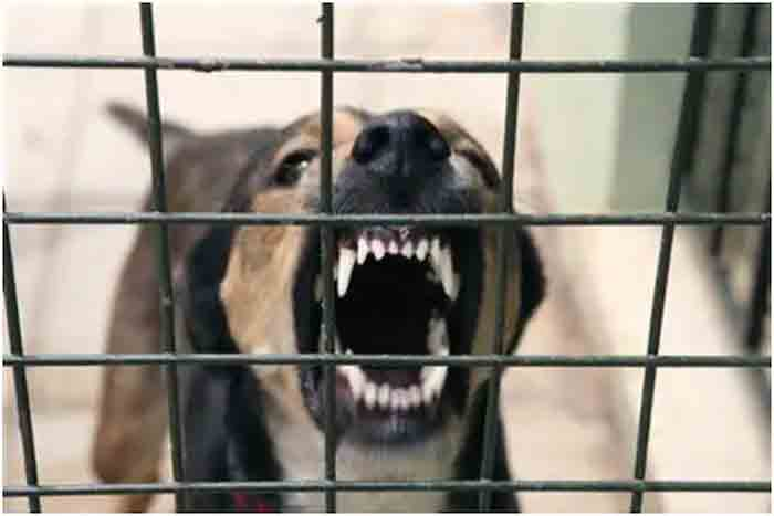 Maharashtra Shop Owner Unleashes Pet Dogs on Police Officers for Demanding Fine for Not Wearing Mask, Maharashtra, News, Local News, Report, Police, Arrested, National