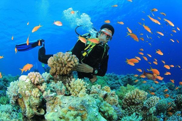 ngắm san hô Tứ Đảo Nha Trang