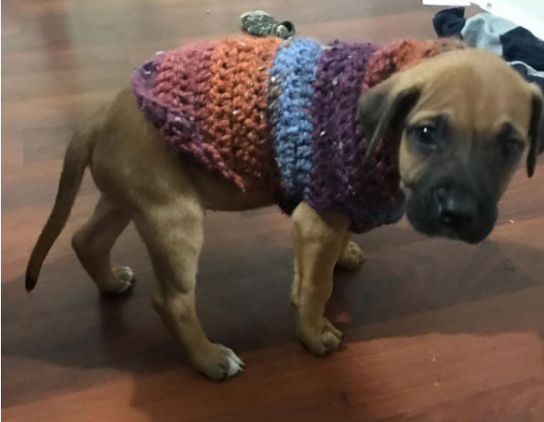 a puppy in a coat made of crochet wool